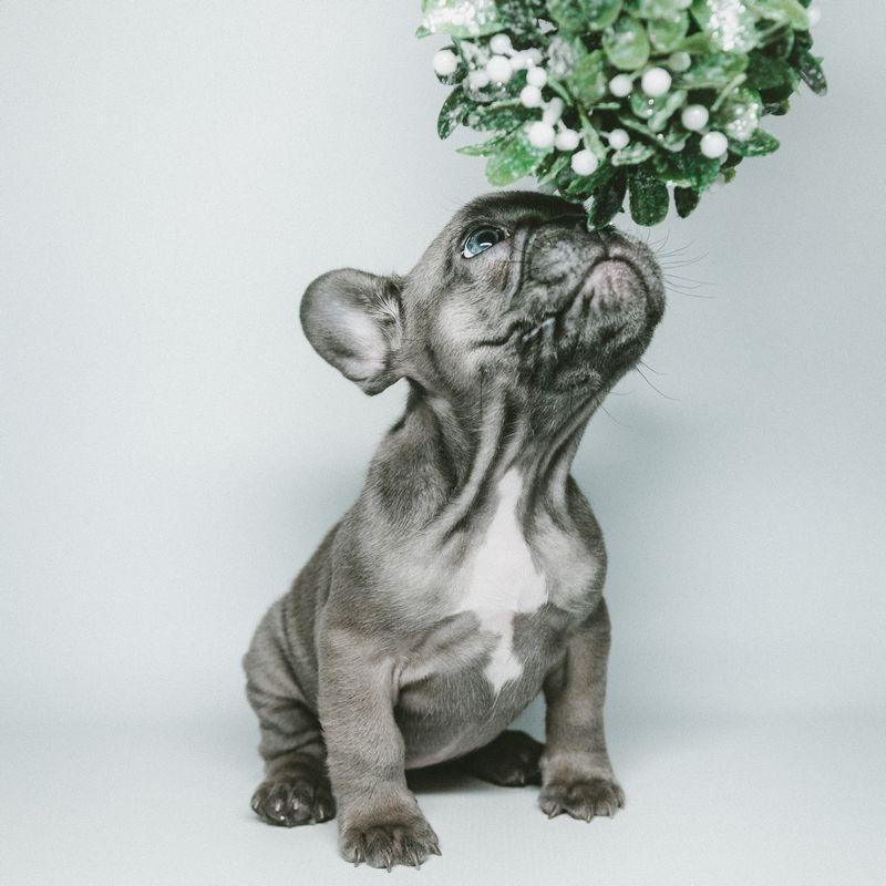 Ozdoby dla psa