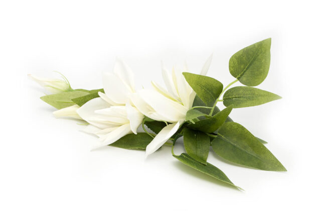Spinka magnoliowa Ptaszarnia